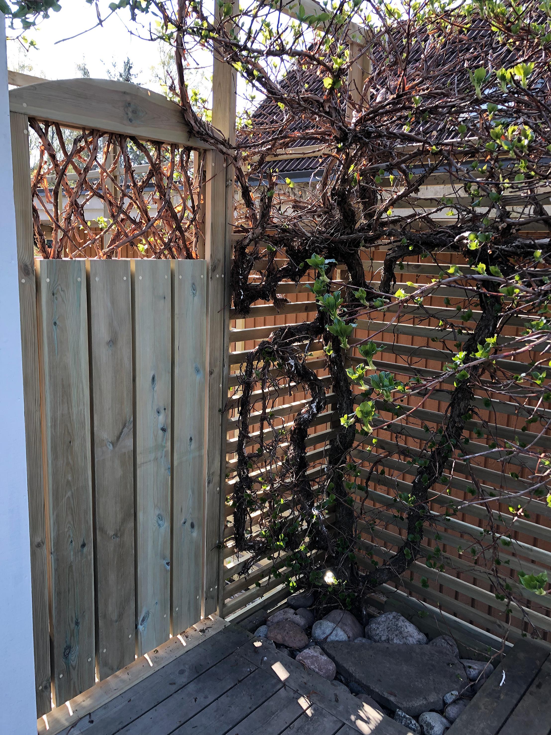Trädgårdsdörr, uteplats, uterum, klätterhortensia, staket